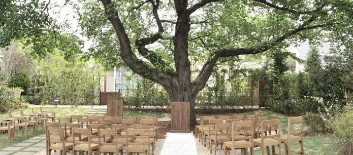 樹齢100年以上の桜の大木